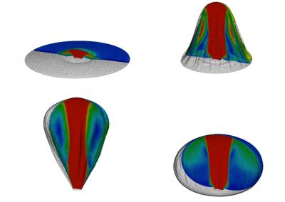 Simulazione numerica dell'apertura di un airbag: esempio di interazione fluido-struttura