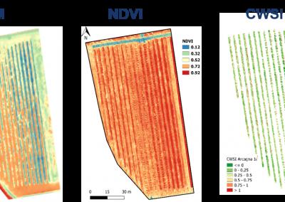 Rilievi UAV multispettrali e termici UAV su frutteto per la sperimentazione di irrigazione di precisione